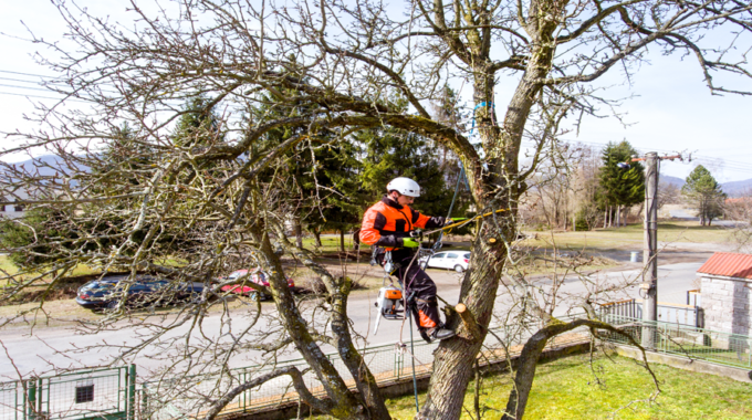 Tree Surgery Services in Newcastle & North East